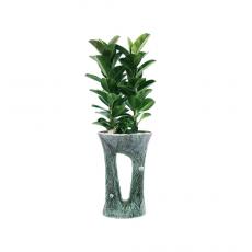 관엽식물-고무나무-106