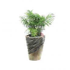 관엽식물-켄쟈야자-110